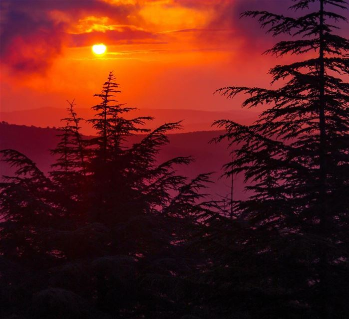 """Sunset is the opening music of the night"" ... Sunset sunshine cloudy... (Al Shouf Cedar Nature Reserve)"