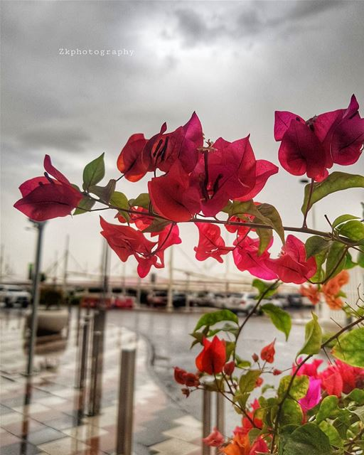 April Showers ⚘🌧 * amazing_qatar  qatarism  clubhdrpro  clubasiapro ... (Mall of Qatar - قطر مول)
