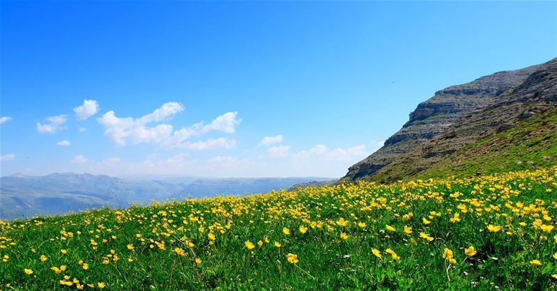 Blooming mountain meadows🌼🌼🌼🇱🇧————————————•Fujifilm 📷©️All rights... (Mount Lebanon)