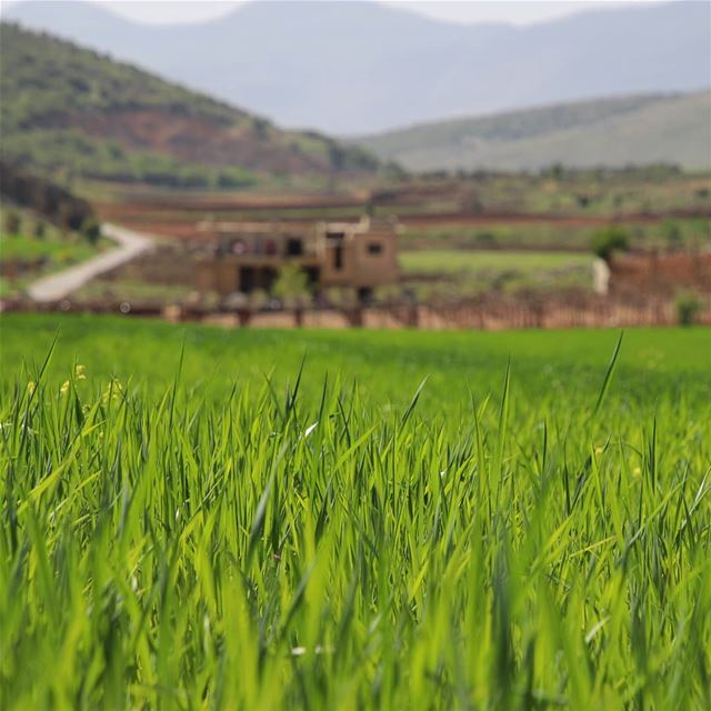 Depth of Field.. literally 😉 nature_brilliance  splendid_nature ... (West Bekaa)