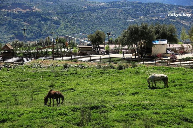libanon nature morning hourses animalplanet animallovers... (Ehmej, Mont-Liban, Lebanon)