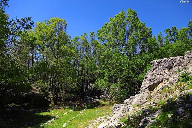Book your hike and unveil the hidden gems of  JabalMoussa ~ unescomab ...