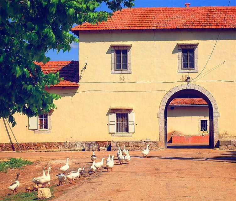 Farm life 🌳🏡 🇱🇧🔹🔸 farmville  goose  geese  farmanimals ... (Lebanon)