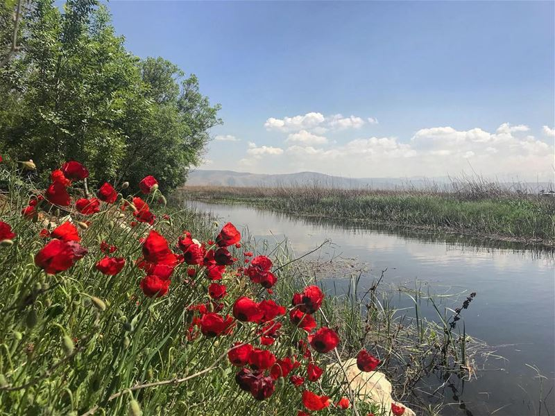 🌹‼️‼️................. lebanon  nature  landscape ... (West Bekaa)