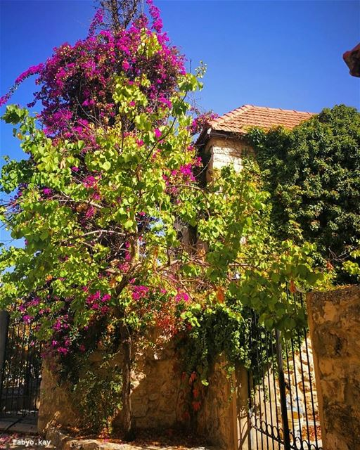 morning house flowers nature canon flowershot insta_flowers... (Chouf)