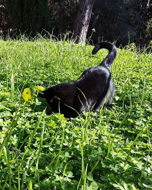spring  play  time  cat  garden  colors  green  field  picoftheday ...