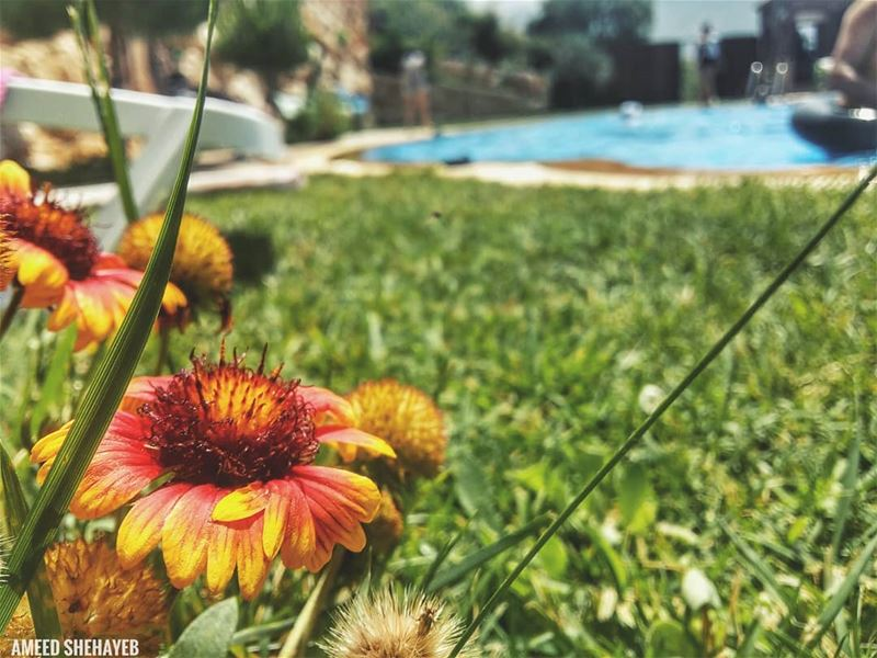 """Summer is very precious.""-Dylan Lauren summer  livelovebeirut ... (Aley District)"