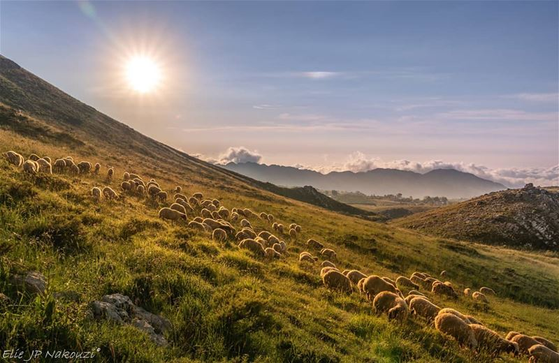 Look for something positive in each day.🐑🌿🌄 nikon  photography ...