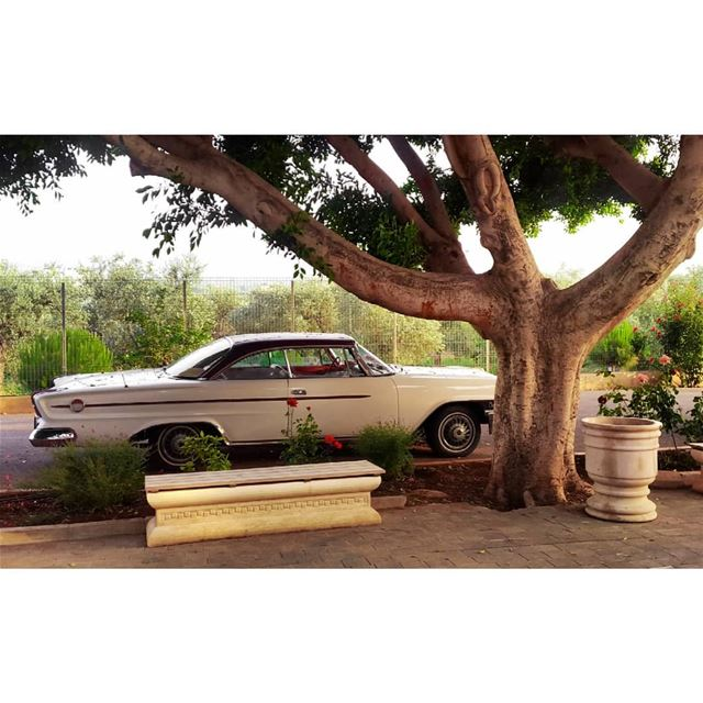 photography photooftheday old car vintage oldies sunset insta view...