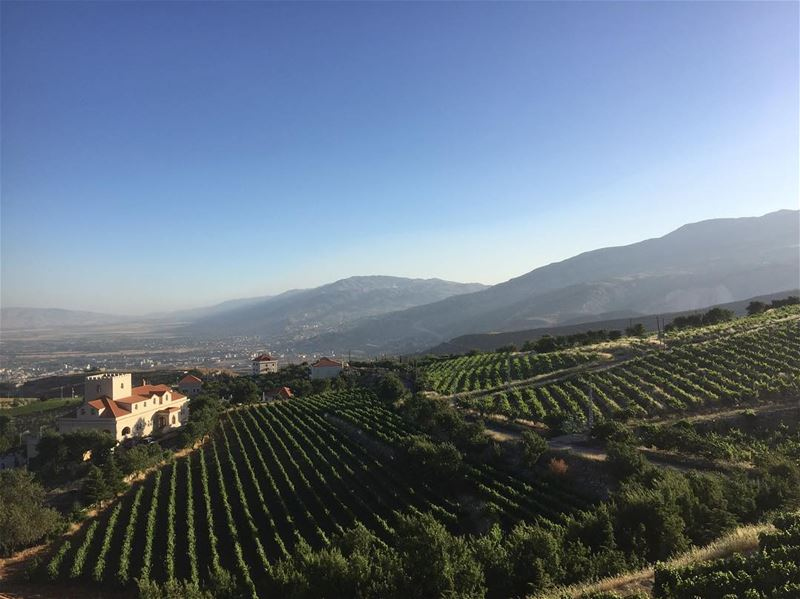 bekaa  valley  mountains  vineyard  nature  lebanon  beautiful  nature ... (Zahlé, Lebanon)