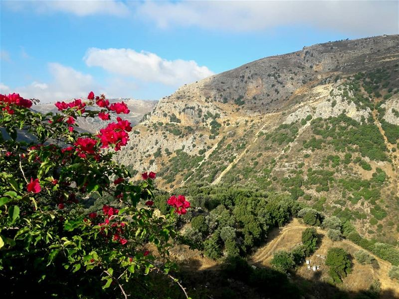 View from today Morning ❤💚🌹🌸 flowers  mountain  sky   blue  green ... (Deir Mimas)