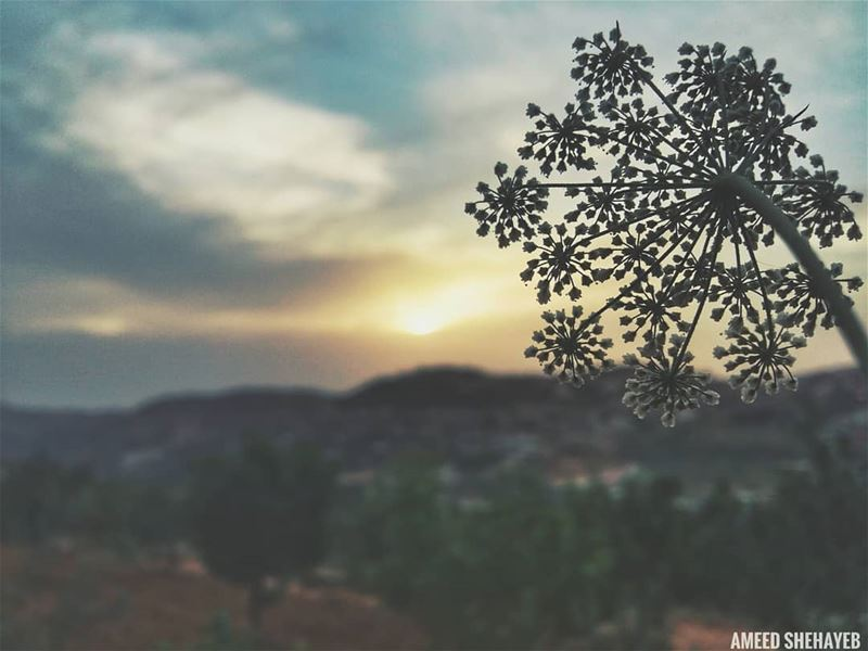 """The world changes when we change our perspective.""  naturephotography ... (Aley District)"
