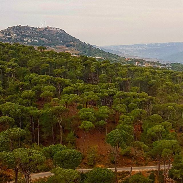 jezzinelove  amazingview  naturephotography  beautifulcountry ... (جنة الصنوبر)