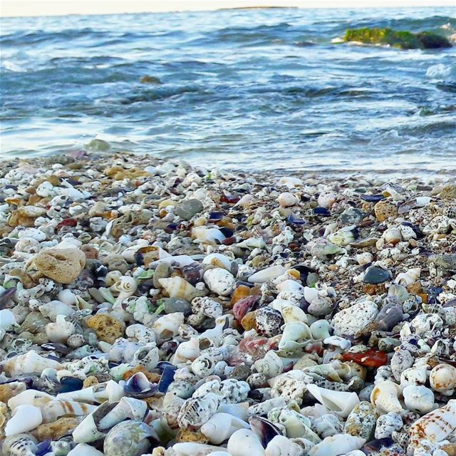 Mosaic 3 🌊🌊🌊  Beautiful  Colorful  Beach  Rocks  Fossils  Skeletons ... (جزيرة عبد الوهاب)